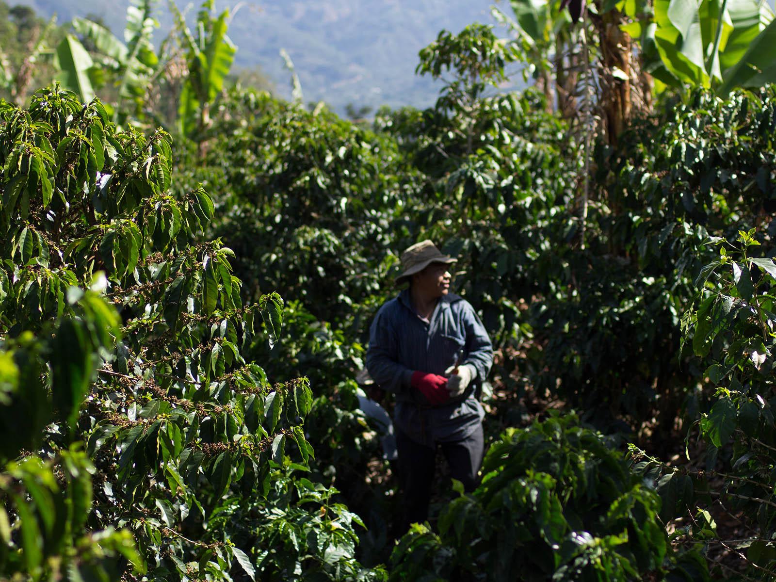 Erster klimaneutraler Kaffee weltweit