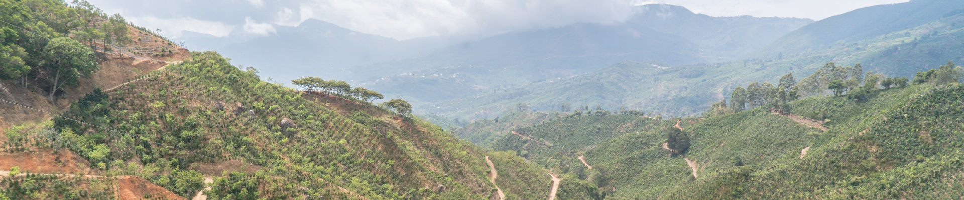 Costa Rica Kaffeeplantage